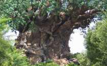 Железные деревья и кустарники: особенности и применение