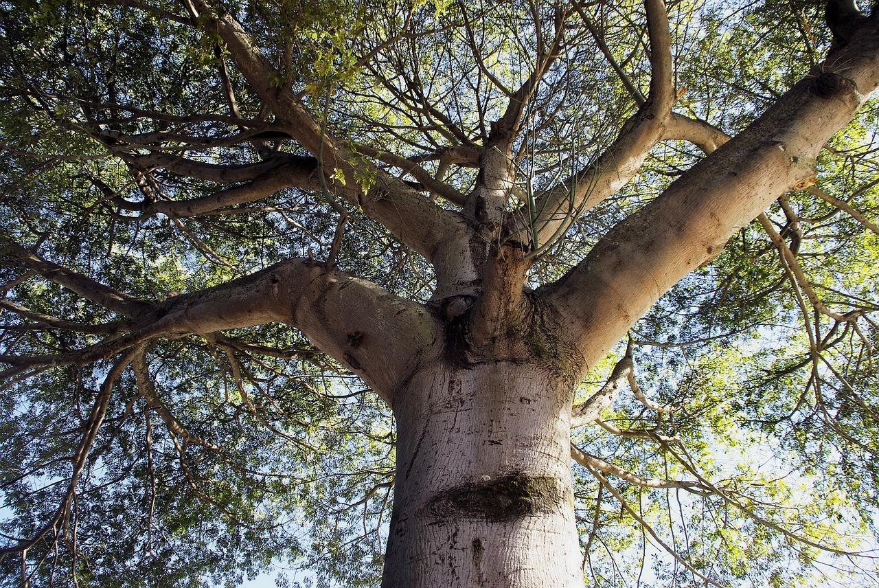 плотность железного дерева
