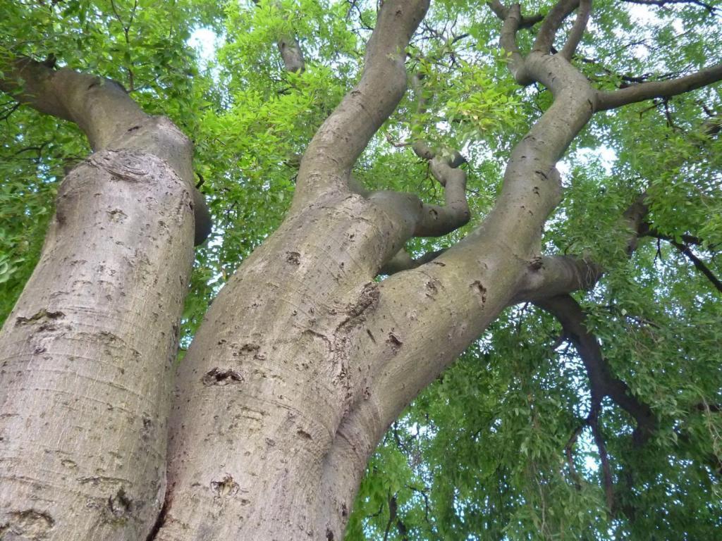 каркас каменое дерево