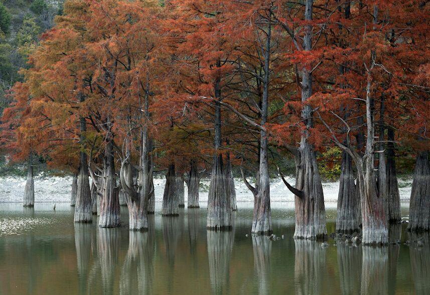 озеро с болотными кипарисами