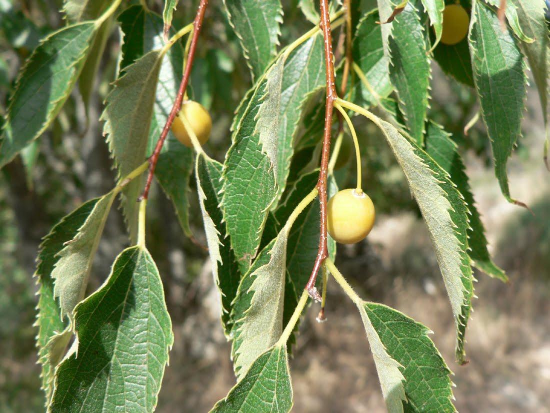 каркас дерево