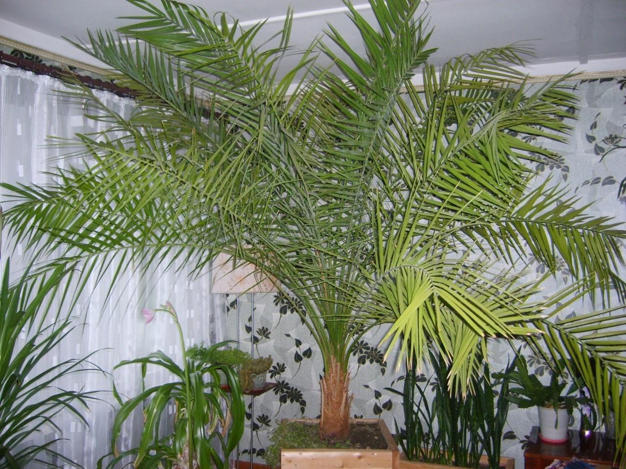 финиковая пальма среди других растений